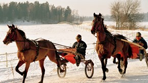 In Sweden there are mainly sport- and companion horses.