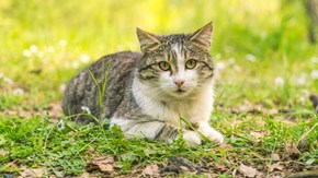 giardia katt till manniska