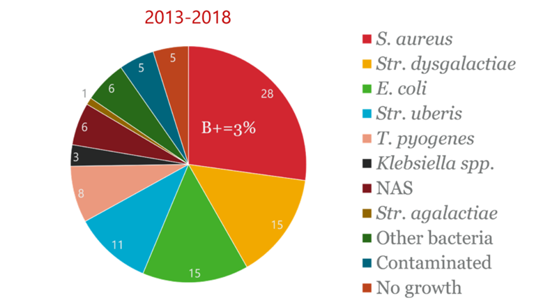 Distribution (%) av bakteriologiska diagnoser från fall av kliniska mastiter i den nationella studien från 2013-2018.